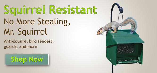 Wild Bird - Squirrel-Resistant (Anti-Squirrel) Bird Feeders